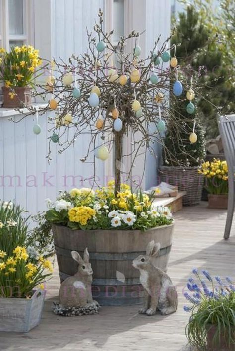 Holzfass bepflanzt mit Salix caprea 'Pendula' ( Kaetzchenweide ) Fruehling auf Deck, Weide im Fass, Primeln, Bellis, Narzissen, Muscari
