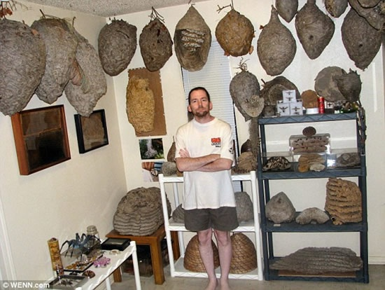 Terry-Prouty-wasp-nest collection possibly the most impressive in the world.  Read more at http://www.odditycentral.com/pics/the-impressive-wasp-nest-collection-of-hornet-boy.html#8xSp1PKy3AgKcP4L.99
