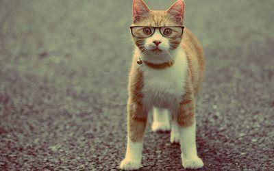 Scarica sfondi glasses, scienziato gatto, gatto rosso, posa