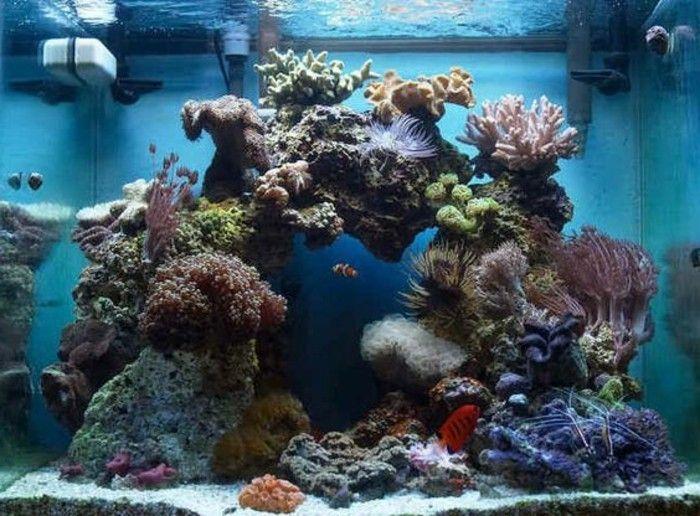 viereckiges aquarium fur fische steine meerespflanzen koralle blaues wasser aquarium einrichten