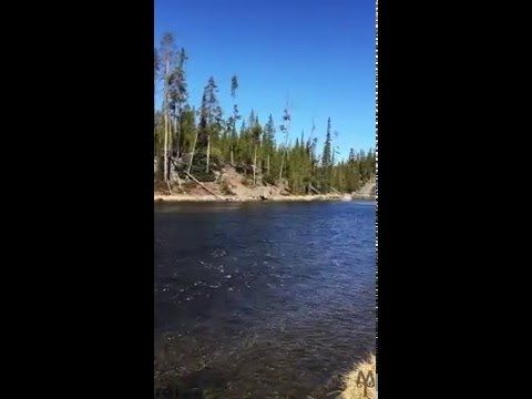 Your view fly fishing the Firehole River in Yellowstone National Park