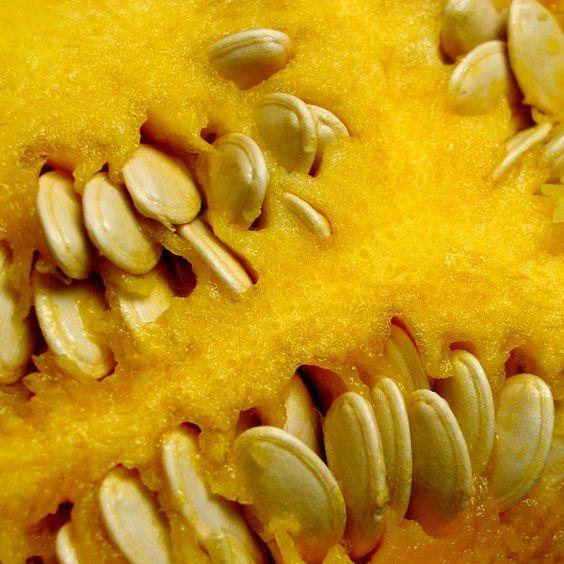 Kürbis pflanzen – Kürbis züchten mit Kürbissamen – Kürbisse selber aussäen
