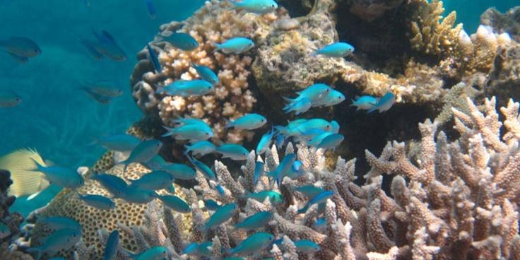 Snorkelled the Great Barrier Reef, Cairns & Port Douglas, Australia.
