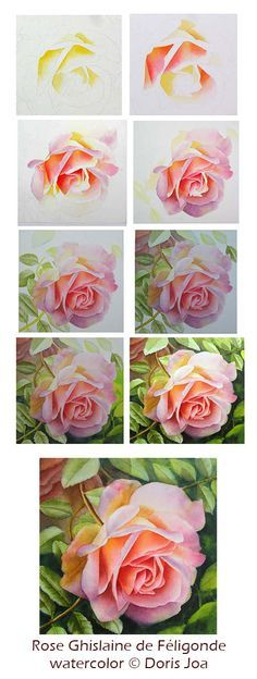 Learn how to watercolor the beautiful Rose Ghislaine de Feligonde - mixing colours, adding beautiful leaves and background