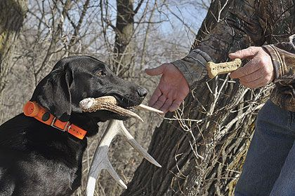 An article from Gun Dog Magazine with tips and tricks for training your dog to hunt for and retrieve sheds.