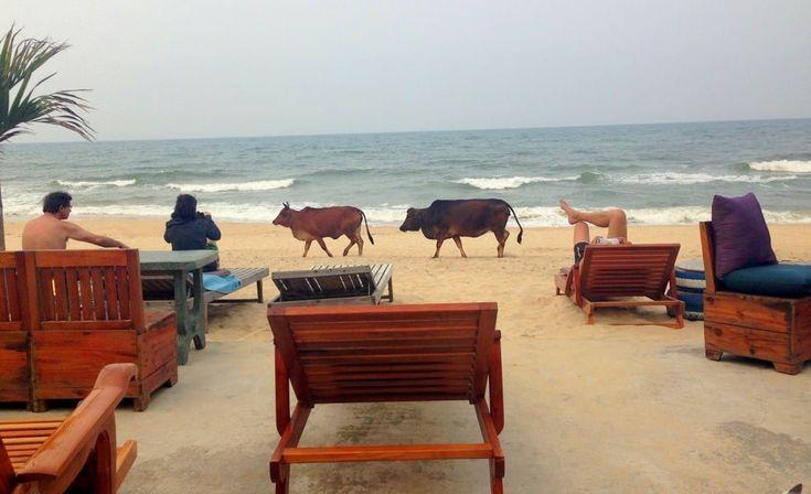 Hidden Backpacker Beachside, Dong Hoi, Vietnam
