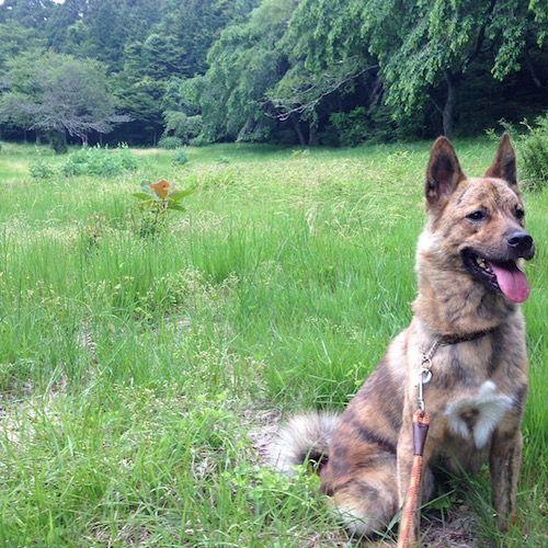 【犬との暮らし方】しつけでは治らない犬の問題行動 | ガジェット通信
