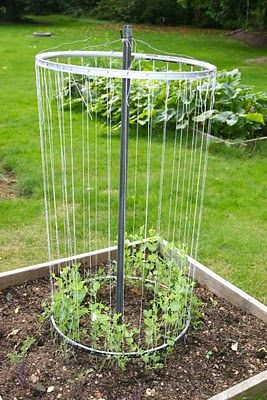 To build the trellis for the peas, the blogger used two old tire rims that the local bicycle shop was more than happy to give her. Looks like she used twine for climbing lines and maybe wire to hold up the top!! What a great space saver in the corner of a raised bed garden, or anywhere else!