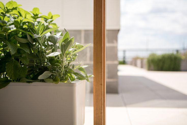 #Glowpear #gardening #urbangarden #patiogarden #smallgarden #smallbalcony #balconyplants #balconygardening #selfwateringplanter #selfwateringpots #selfwateringpotplants #balcony #hangingplanter #balconyplanter #balconyideas #patioideas #gardeningideas #indoorgarden #outdoorgarden #smallgarden #vegetablegarden #herbgarden
