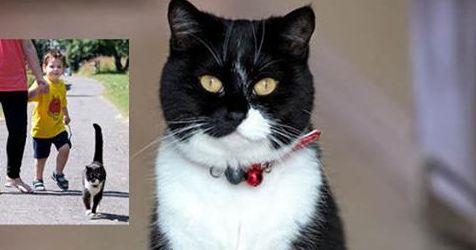 All'asilo con la gatta | BAU BOYS - La community per chi ama gli animali