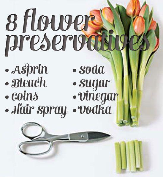 How To Make Flowers Last Longer 8 Pro Tricks Flowers