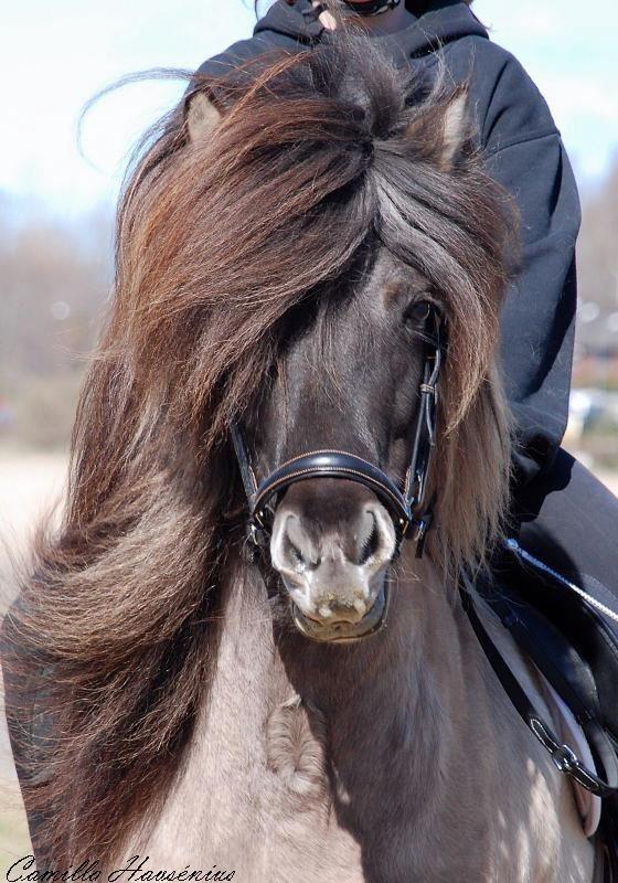 Sålda hästar |
