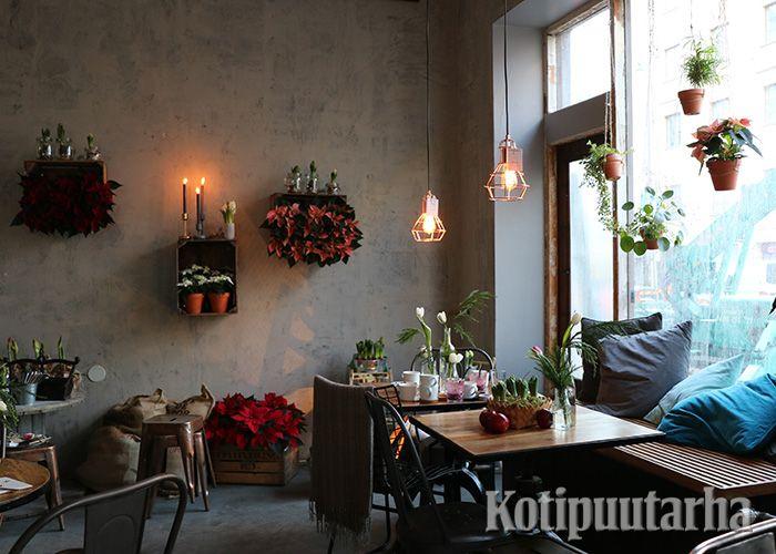 Median joulukukka-aamua vietettiin 29.11.2016 Roots Helsingissä Vaasankadulla. Joulukukkasisustuksen oli loihtinut bloggaaja Viena K.