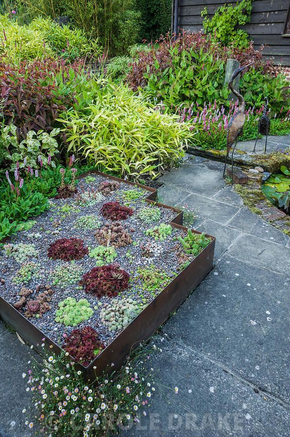 CAROLE DRAKE                                       | The Carpet Garden includes raised beds edged with rusted steel planted with sempervivums in reds and greens, and surrounded by persicarias and bamboos. Dipley Mill, Hartley Wintney, Hants, UK
