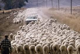 http://stadoowiec.pl/ekologiczny-wypas-owiec/