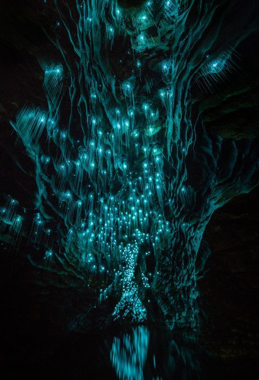 The bottom of one of the world famous New Zealand Glowworm Caves - otherwise known as the Ruakuri Sump. The sump was first explored in 1994 by one of the guides - it's filled with magical glowworms that light the passage.
