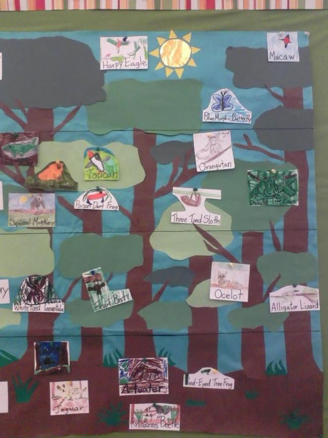 Layers of the rainforest activity