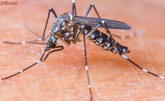 Cachoeiro terá mais de 300 armadilhas para combater mosquito Aedes aegypti