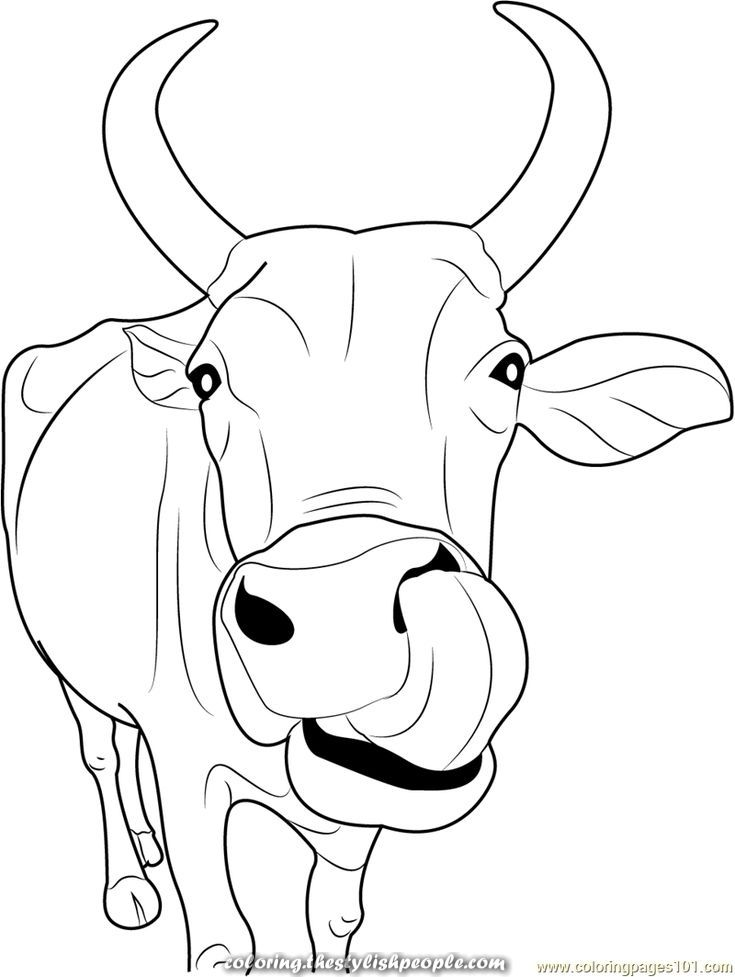 Great Cow Coloring Pages 1printable Pages And Coloring Sheets For Cow Cow Illustration Cow Art Cow Coloring Pages