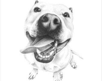 Fine Art pit bull prints hand numbered and signed by the