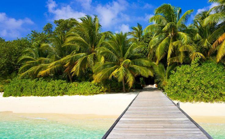 Palm Trees HD Wallpaper