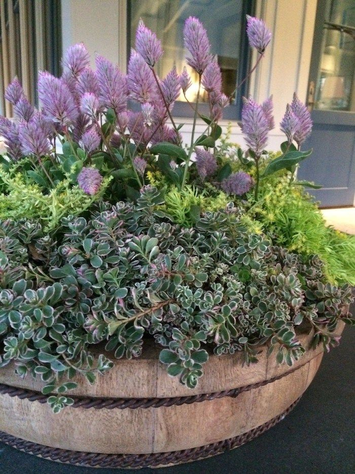 A Spring Container Garden Idea That Calls For Very Little Watering By Carmen Johnston Gardens Loves The Heat And Doesnt Need Frequent Watering