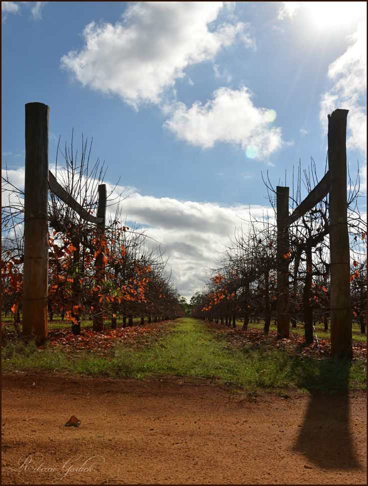The beauty of Kingaroy - I was captivated by the colours!