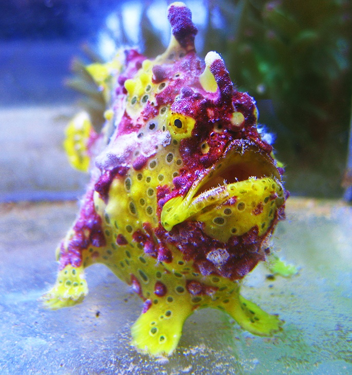 17 best images about reef safe fish on pinterest for Exotic saltwater fish
