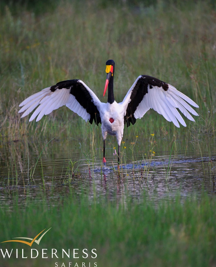 The birding on the floodplains, especially once the inundation arrives is spectacular! #Safari #Africa #Botswana #WildernessSafaris