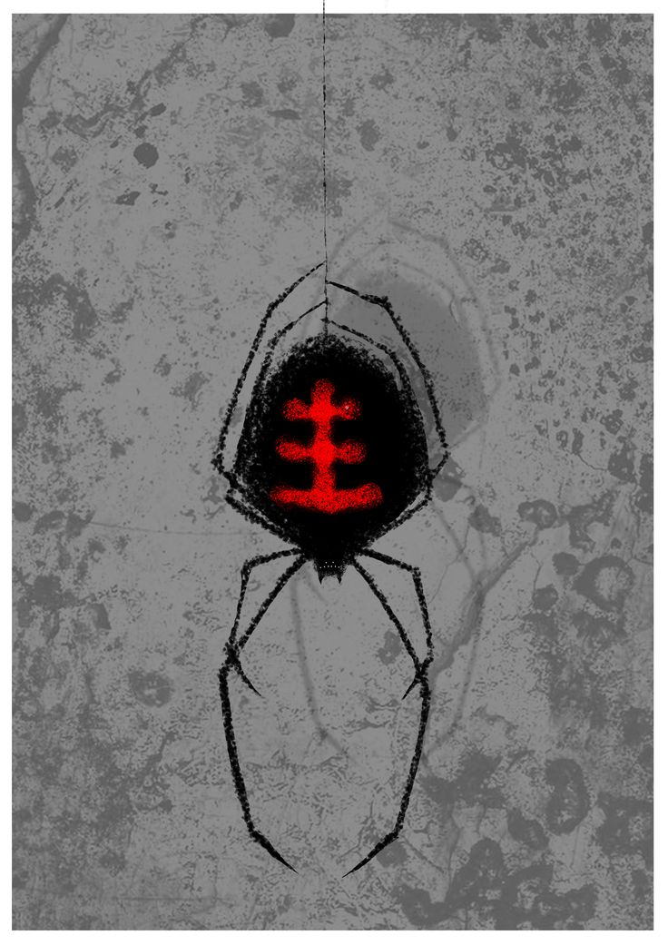 Il ragno nero  #digital #illustration #painting #drawing #spider #blackwidow #black #widow #wacom #gimp #digitalart