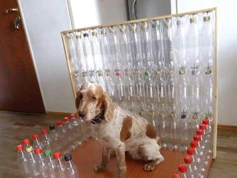 Caseta para mascotas.
