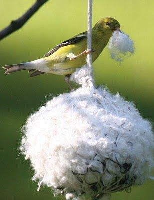 Nesting ball for goldfinches of soft cottons, hair, milkweed, thistle, or cattail fluff.