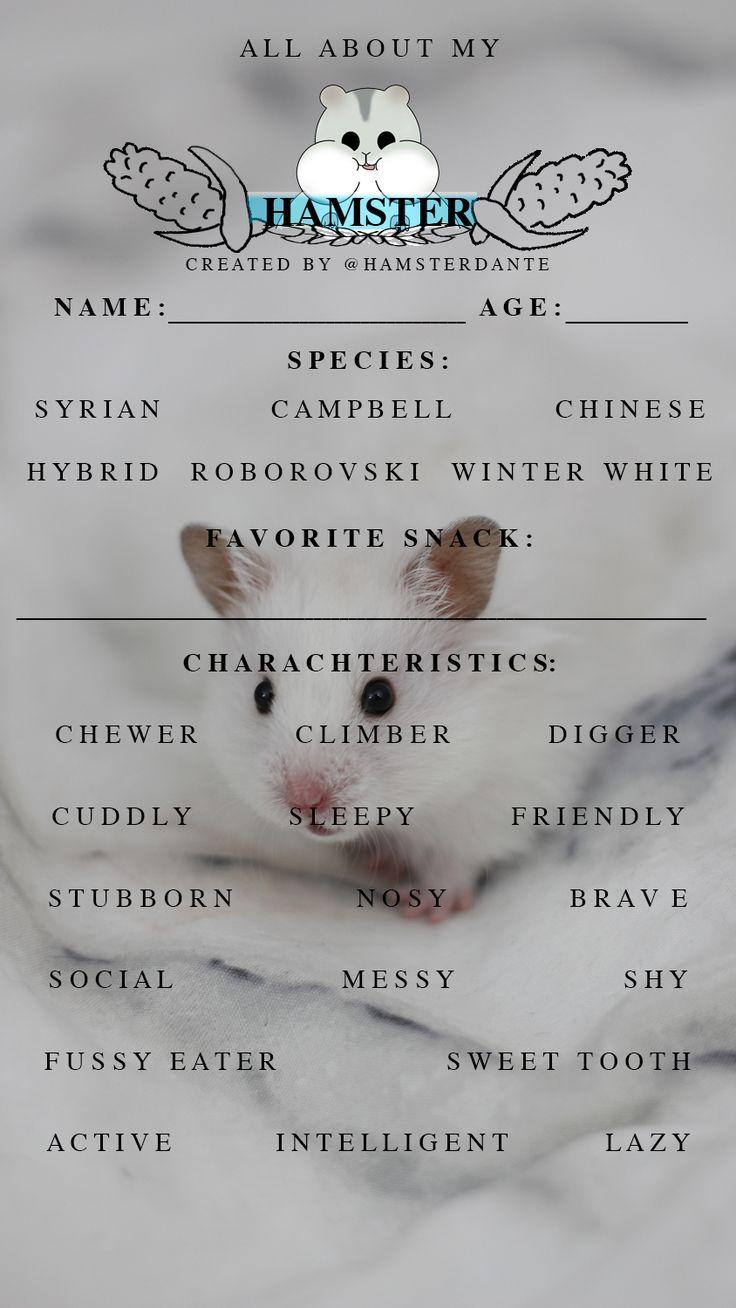 hamster kennenlernen fragen an frau zum kennenlernen