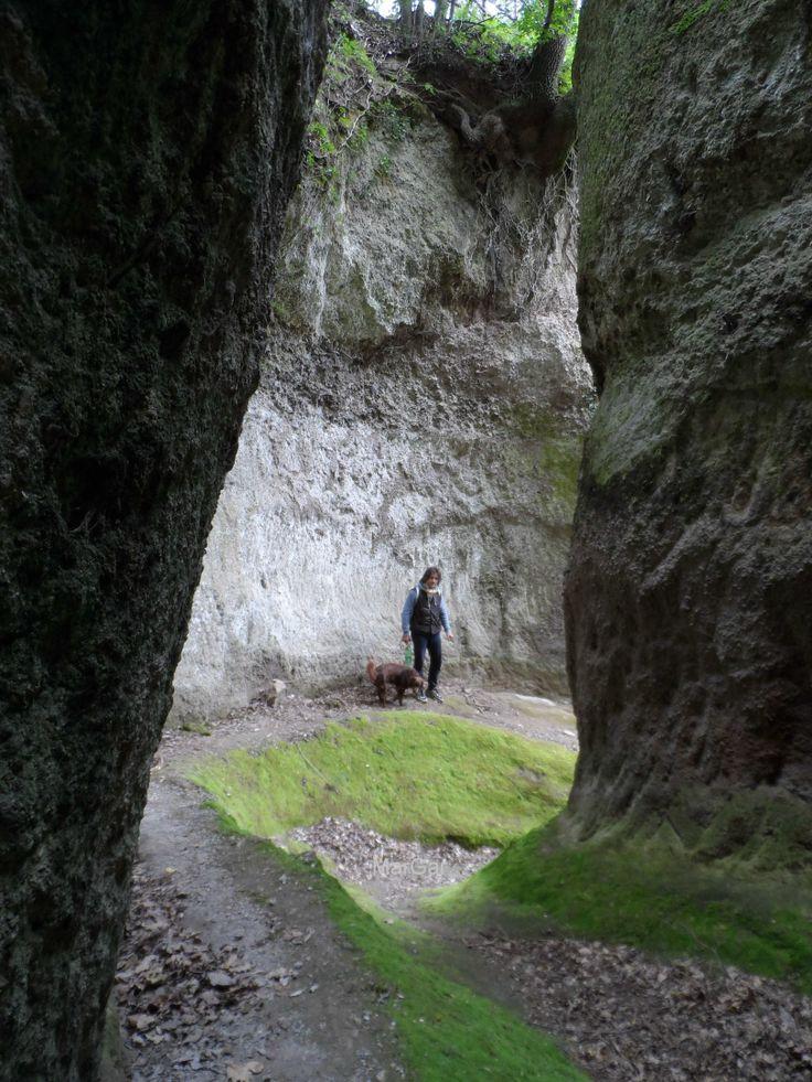 L a via cava della Madonna delle Grazie http://www.agriturismopianarborello.it/agriturismoinmaremma_blog.asp?ID=11