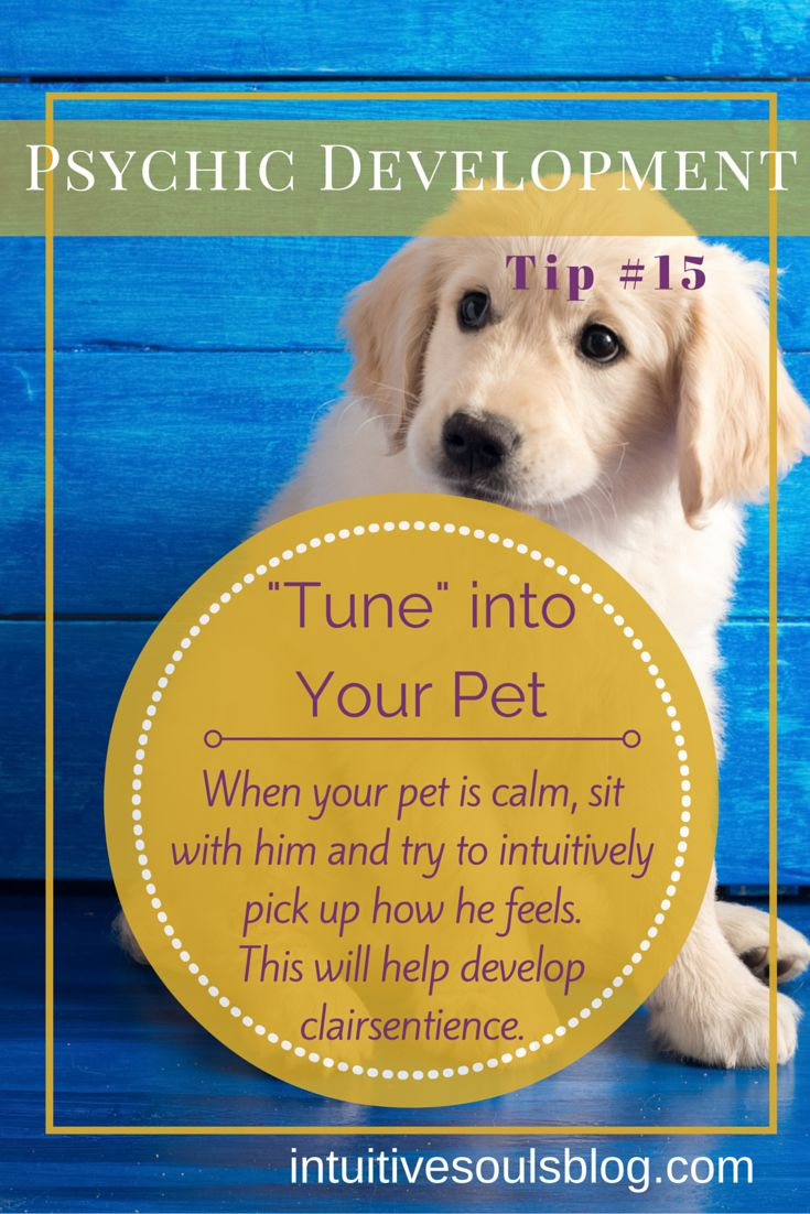 "Psychic development tip: ""Tune into"" your pet to develop clairsentience. See all 28 tips: http://intuitivesoulsblog.com/develop-your-psychic-abilities/"