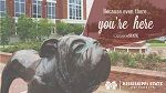 Mississippi State University bulldog Statue wallpaper / screensaver download