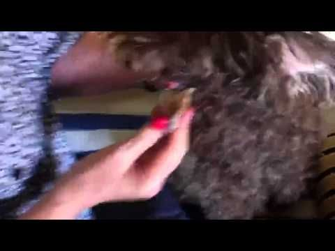 how to get rid of dog warts
