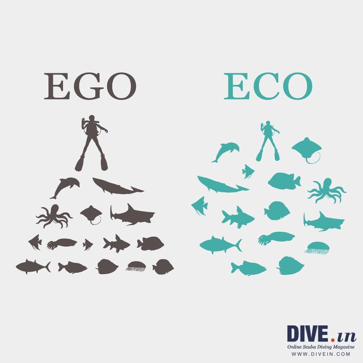 One letter can make a huge difference #scuba #diving #marinelife