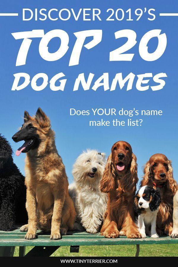 Top 20 Best Dog Names For 2019 Boys Girls Dog Names Best Dog