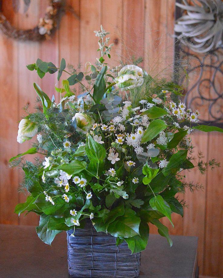 ホワイト&グリーン系で😃 #succulents #cactus #natural #display #terrarium #flower arrangement #dry flower #Antique #hanauri #はなうり #津山市 #津山 (はなうり)