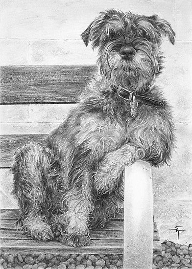 I Blame The Government! by Sami ThorpeImage Search, Dogs Art, Fine Art, Schnauzers Drawing, Pencil Drawings, Adventure Art, Pencil Art, Sami Thorpe, Animal
