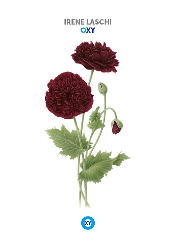 IRENE LASCHI / Botanical Illustration / @ : oxy-illustrations@orange.fr