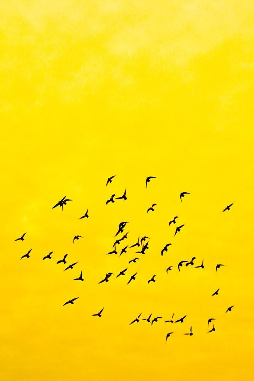 Birds in yellow by Daniel Mock via 500px.