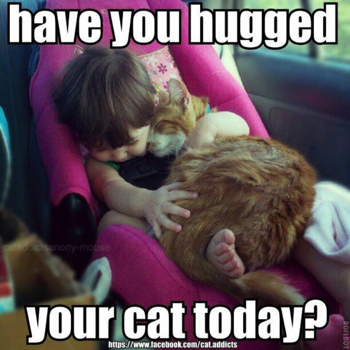 Have You Hugged Your Cat Today