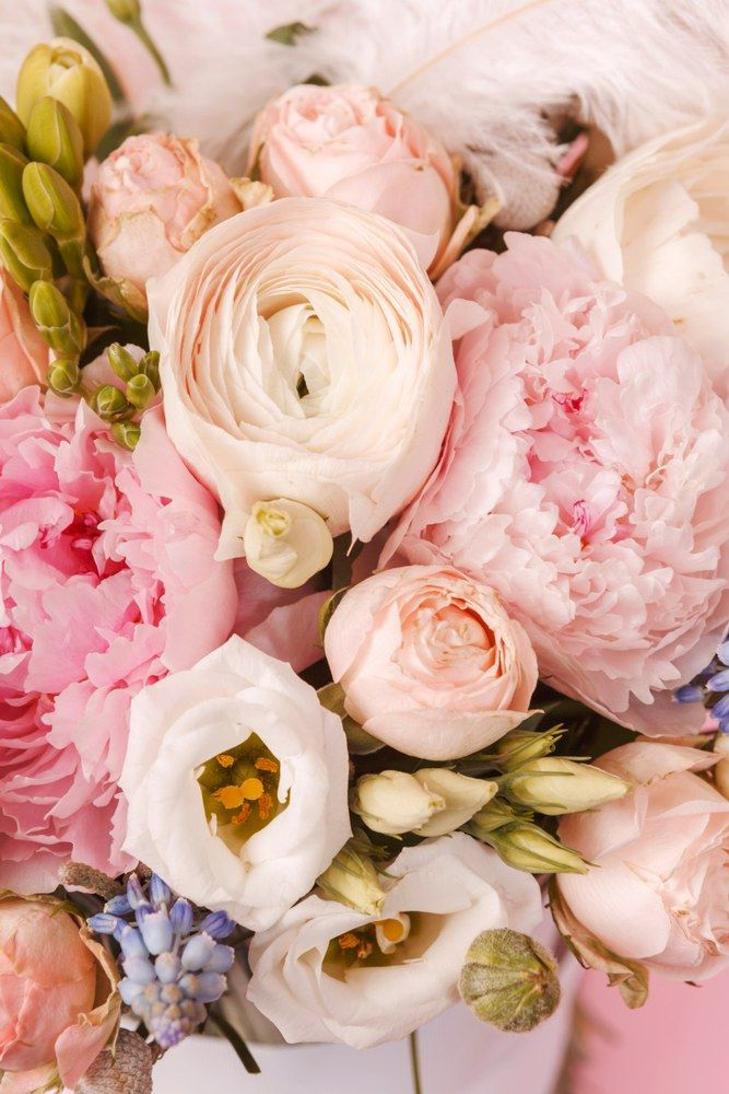 Peonies And Ranunculus Flower Bouquet With Feather On Pink Background Close Up Weddingbouquets In 2020 Wedding Bouquets Flowers Bouquet Bouquet