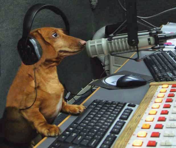 The Long and Short of it All: A Dachshund Dog News Magazine: What a Wiener! Hobbes the Dachshund Transforms Talk Radio in Vermont.