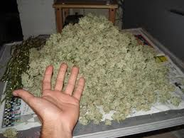 BUY MARIJUANA ONLINE Go to : realweedshop.com   DELIVERY IS DONE TO ALL 52 STATES IN USA, CANADA, UK, AUASTRALIA AND EUROPE WITH QUICK, DISCREET AND SECURED SERVICES