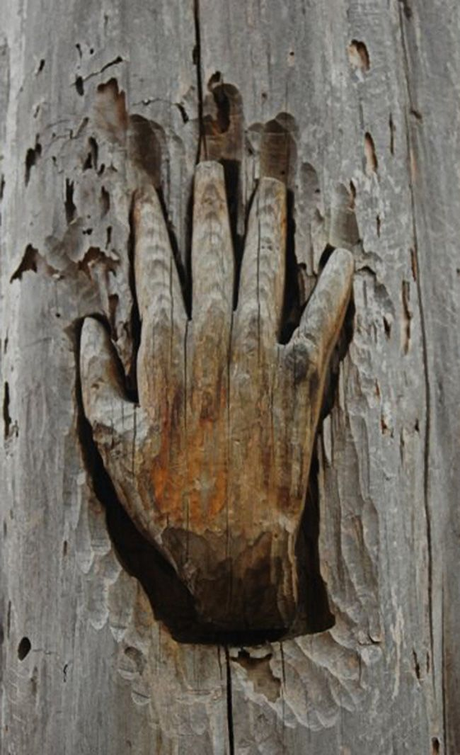 Images about tree carvings on pinterest weird
