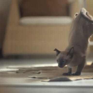 ikea releases 100 cats into a store