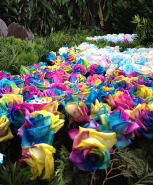 Feria de Las Flores: Medellin Colombia Flower Festival